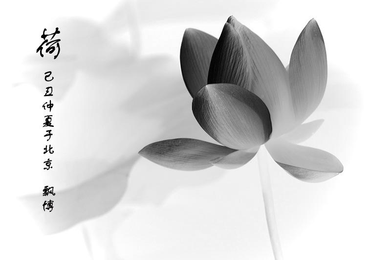 单水墨画荷花-第一张片子是用两张数码纵拍接成方片,仿6t6,边5000多象素.其余