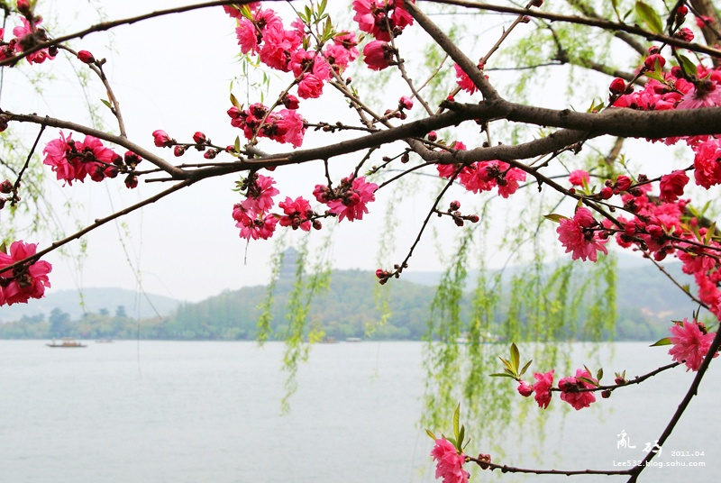 三月西湖,桃花盛开的水岸(26p)