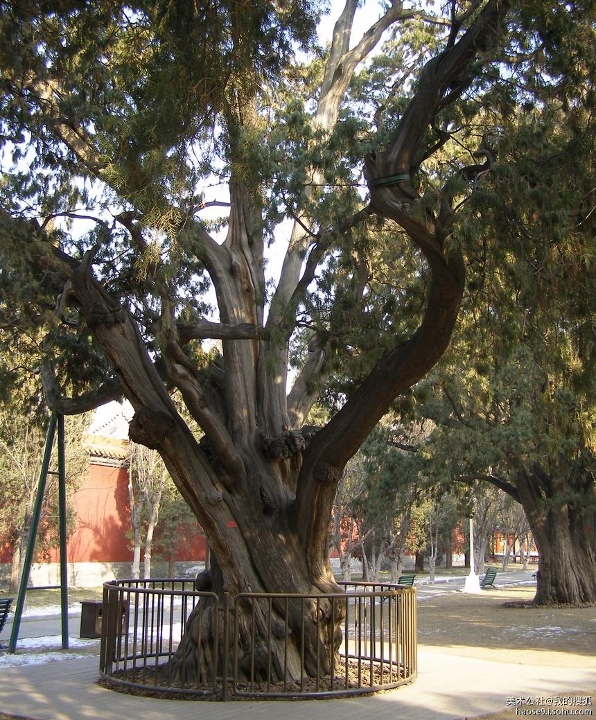 壁纸 树 榕树 860_1039