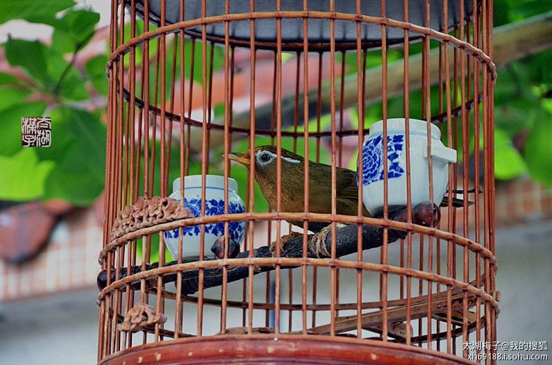 可爱的小鸟 牢笼