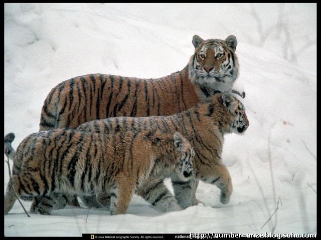 猫科动物的运动规律