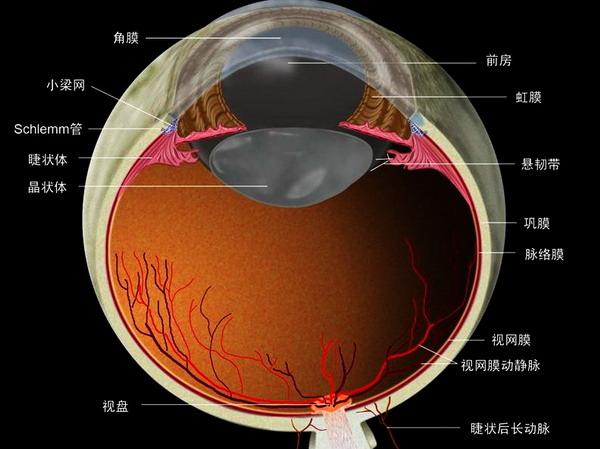 我搜集的眼球解剖图谱
