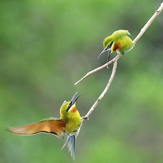 你的鸟儿会唱歌网盘