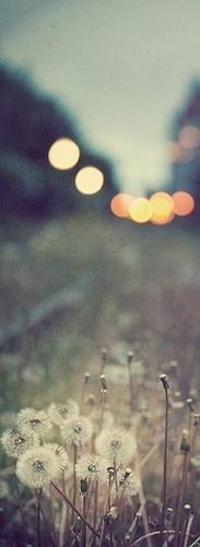 给你歌词/将我的爱情给你歌谱/将我的爱情给你简谱