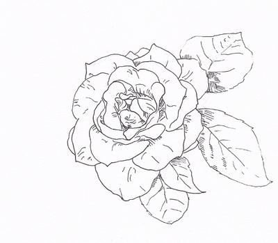 简笔牡丹手绘铅笔画