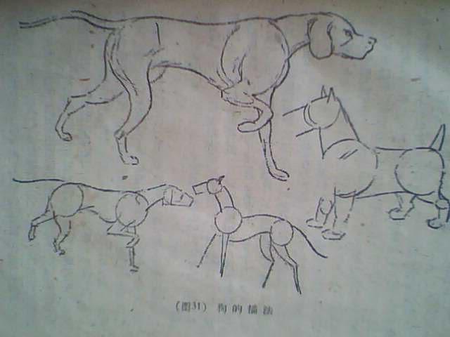 一些动物的简单描画