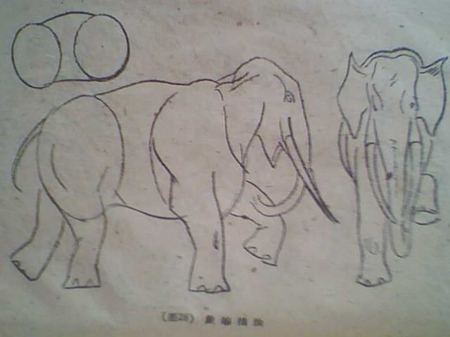 一些动物的简单描画~(转载)