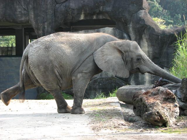 再游台北市动物园