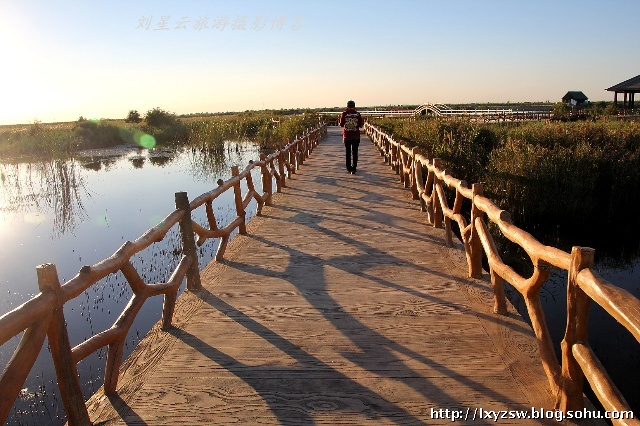 还有位于东营市河口区孤岛镇的亚洲面积最大的人工刺槐林.