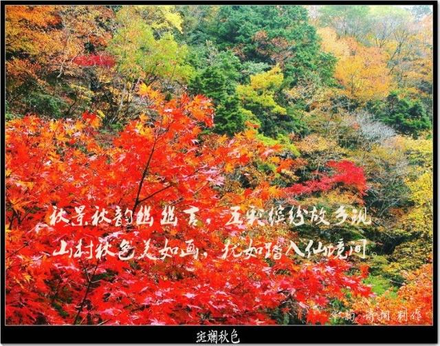 ··  故乡秋日的山野,植物和花草有