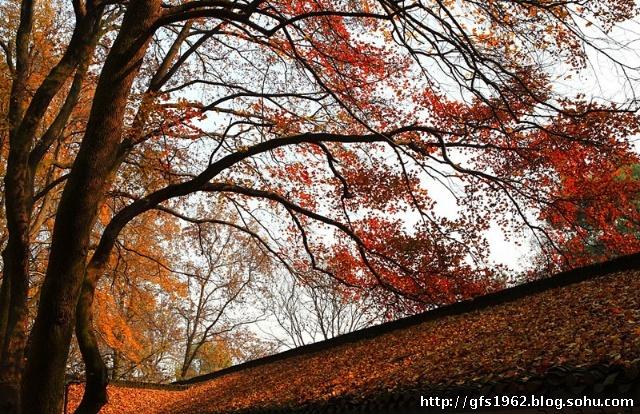 橘子洲的烟花定时燃放,冬,春季为20:00—20:20,夏,秋季为20:30&