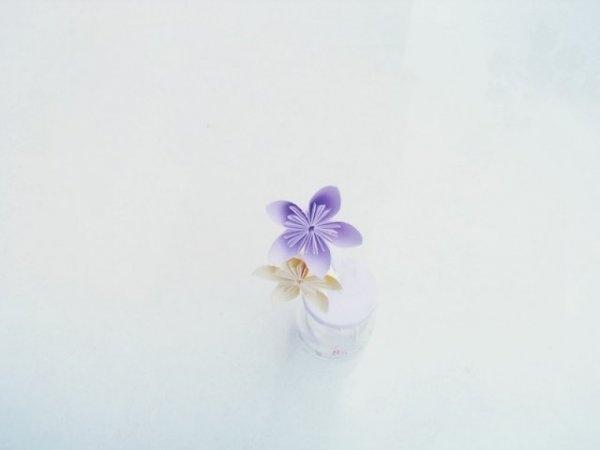 花蝶相思苦简谱