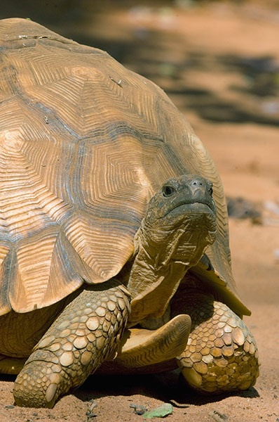 濒临灭绝的前十种动物