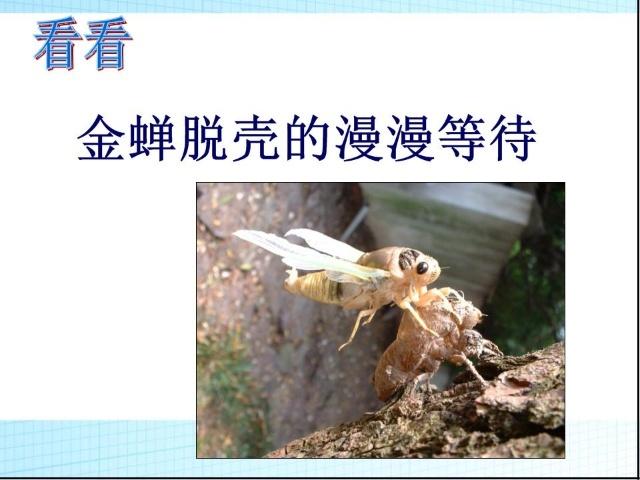 说来也奇特,一般动物的骨骼长在皮肉之内,由皮肉包裹着,昆虫的骨骼却