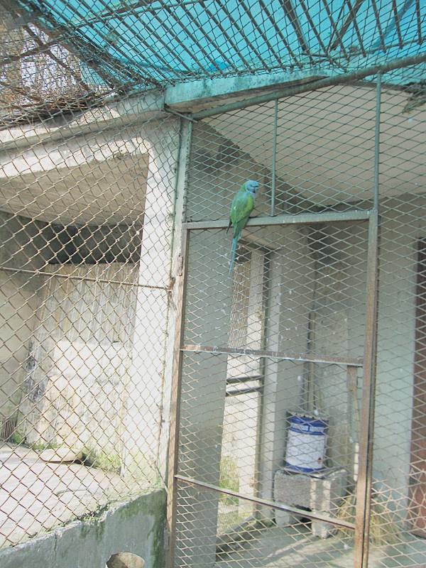 冬游 黄山野生动物园