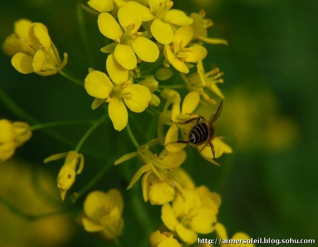 春天里勤劳的小蜜蜂