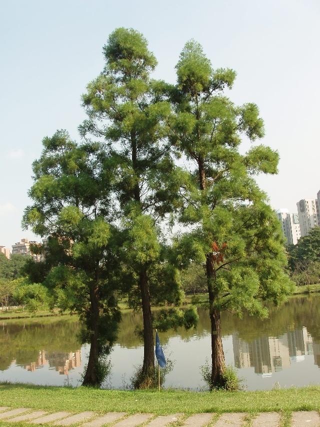 园林水景植物种植设计