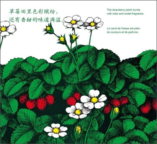 国画草莓的画法步骤